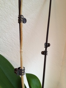 Orchid Stem Brown Here S What To Do Orchidsmadeeasy Com