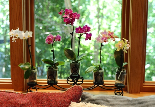 How To Display Orchids Orchidsmadeeasy Com