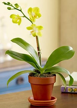 orchids care is your orchid getting enough light