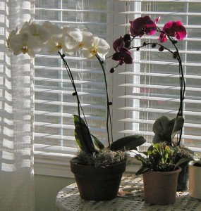 Hydro-Orchids-1