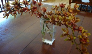 cut orchid flowers