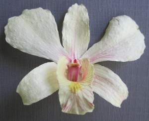 getting inside dried orchid