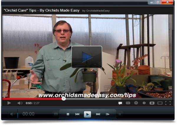growing-orchids-video