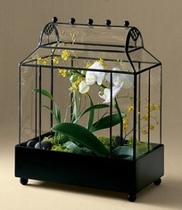 how to display orchids