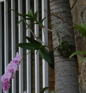 mounting-orchids-1