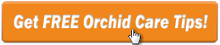 Get Free Orchid Tips