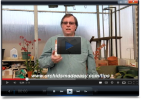 Orchid Care Video