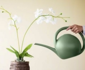 orchid watering basics