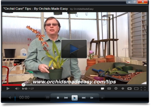 orchids-care-video