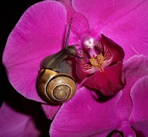 snail and orchid