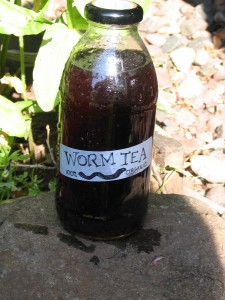 worm-tea-and-orchids